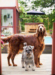 Badliv i trädgården hundar vid poolen