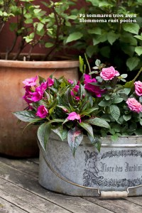 Badliv i trädgården blommor vid poolen