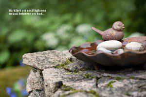 Badliv i trädgården fågelbad