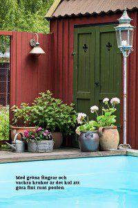 Badliv i trädgården växter vid poolen