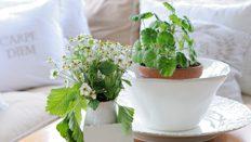Inreda uterum - gröna växter