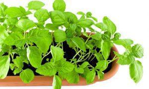 Grönsakstoppen