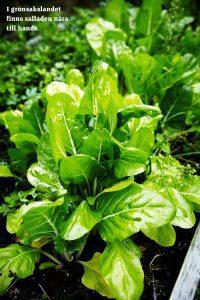 Enkelt utekök - grönsaker