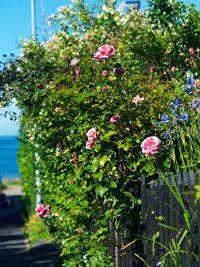 Liten trädgård inspiration - lupinvägen
