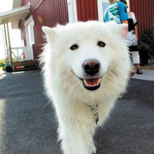 Installera larm - en hund är visserligen ett larm i sig!