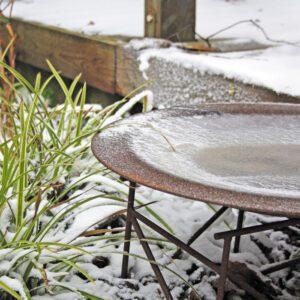 Vintervacker tra╠êdga╠èrd ÔÇô inte bara i tanken 1