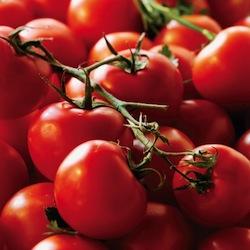 förodla tomater
