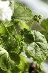 Anne Lundbergs växter får växa sina knoppar i fred