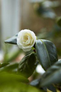 Anne Lundberg - en av många vackra blommor i orangeriet