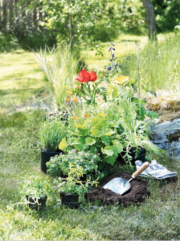 Perenner Trädgårdskalendern