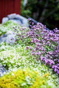 Micke Leijnegard Blommor vid stugan