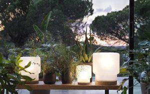 Lampor belysning höstmörker mysigt växter