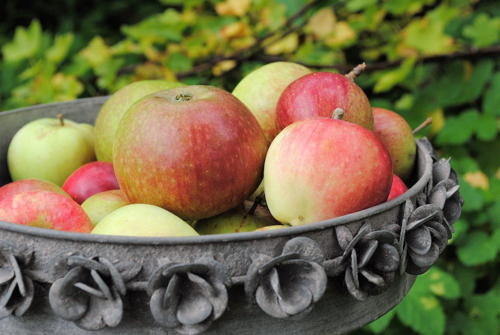 Trädgårdskalendern oktober