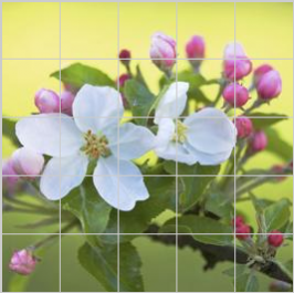 Tiles of Sweden Jj 8045 Blossom