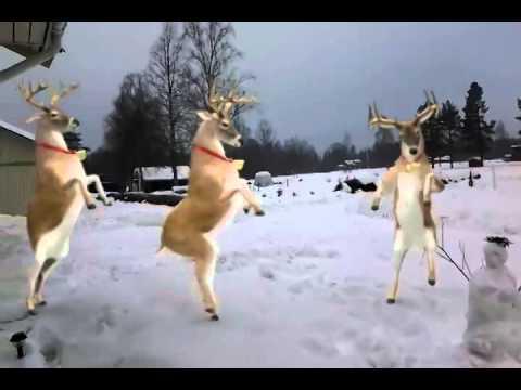 dansande renar