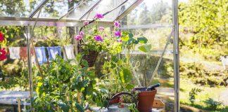 Odla i växthus-interiör