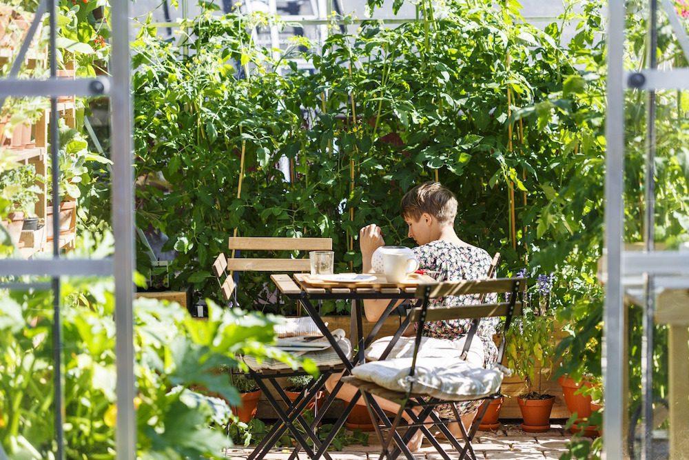 Växthus Odla : Odla i växthuset villaliv