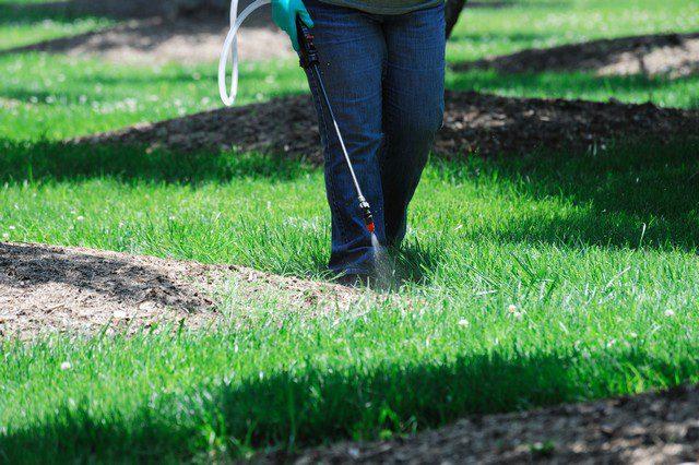 mossa i gräsmattan bekämpningsmedel