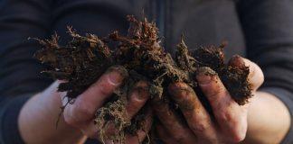 mossa i gräsmattan gödsel