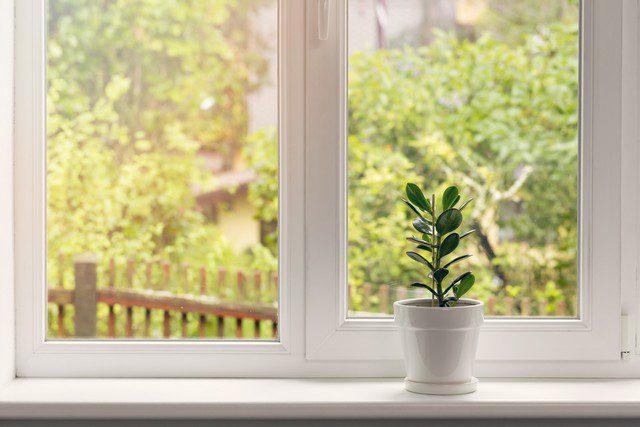 täta fönster sommar