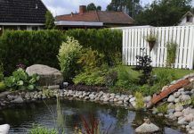 Anlägga trädgårdsdamm