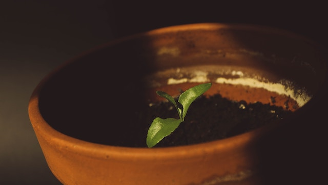 utomhusplantering