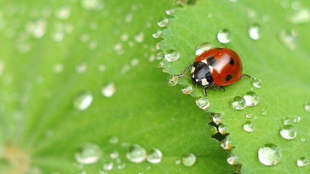 skydda grönsakslandet