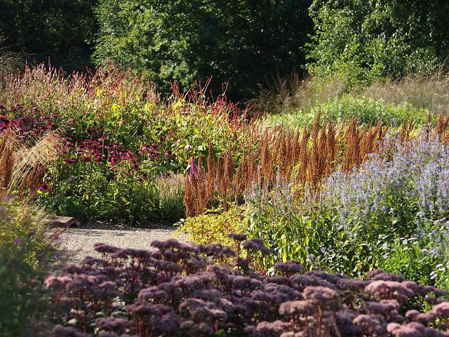 plantera på hösten