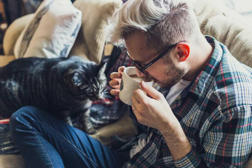 försäkra din katt