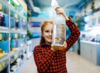 akvariefiskar