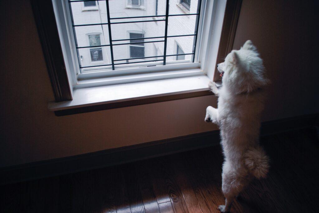 husdjur i lägenhet