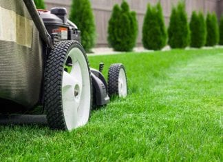fin gräsmatta