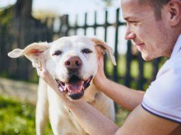 Borsta tänder på din hund på rätt sätt