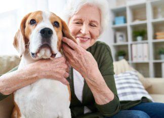 Så rengör du hundens öron på rätt sätt