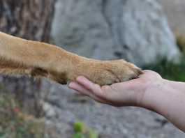 kloklippning hund