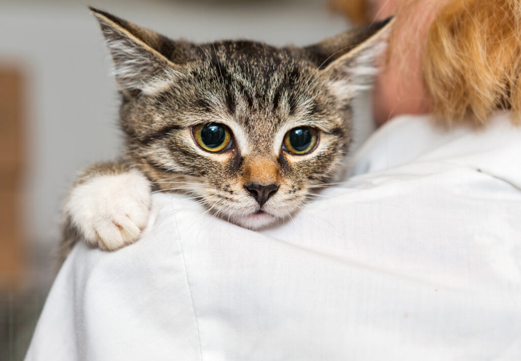 katt kissar utanför lådan