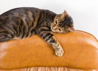 Så får du katten att sluta klösa på möblerna